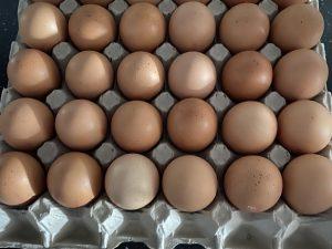 Eieren maat M (30 stuks)